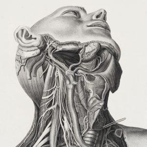 Under the skin 2